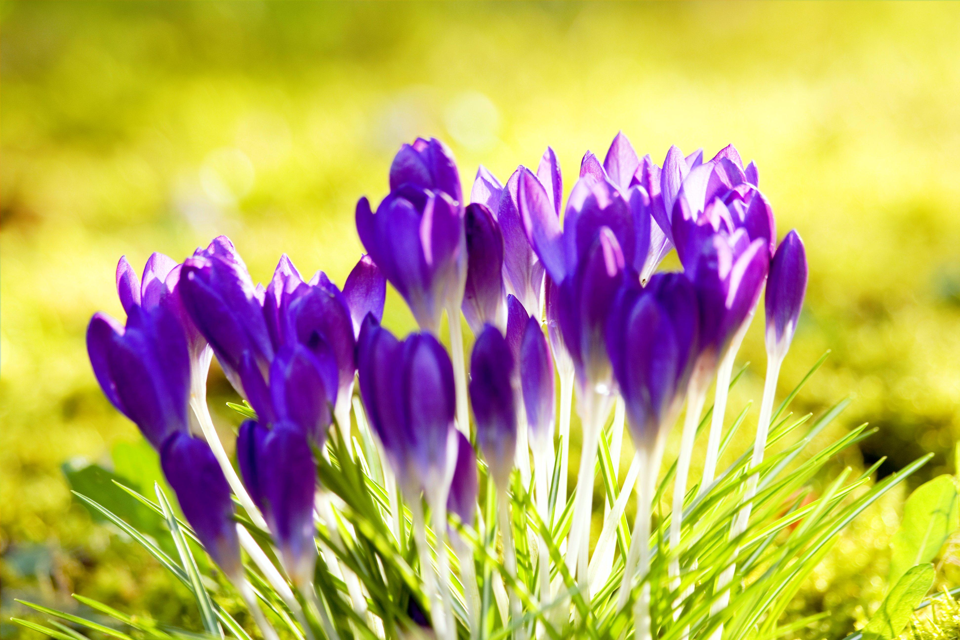 HospizDaheim Blumen